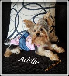 """""""Addie"""""""
