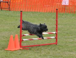 CK Agility competition in Edmonton
