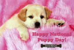 March 23,2018 Happy National Puppy Day