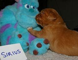 Sirius (blue boy)