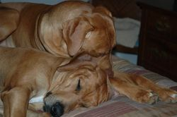 Apollo snuggling with son Titan