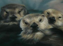 (Otters - detail)
