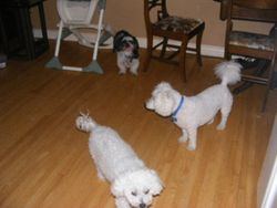 Cujo, Monte and Muffy