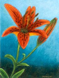 Tiger Lily - The Warrior Prince, Oil Pastel, 11x14, Original Sold