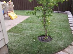 Tualation, OR sod / sod installation services in Tualatin Oregon