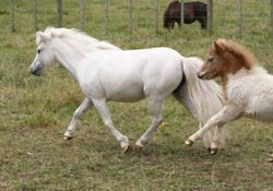 Angels first foal