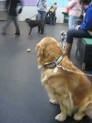 Parker checking out the other dogs at the party