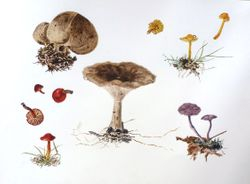 Fungal foray