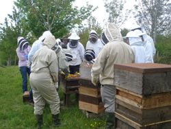 Apiary meeting