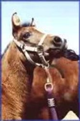 De Novo Miranda as a foal