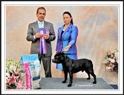 NZ National Dog Show