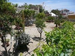Obstbaeume und andere Pflanzen