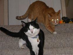 Kingston and Gus