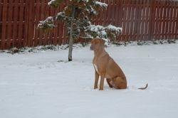 Ttian snow day