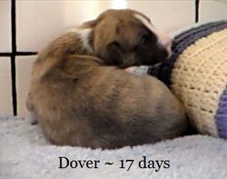 17 days old