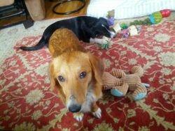 Snoopy & Sasha