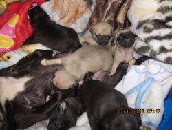 MIXED LITTER PLAYS WITH MOM