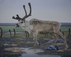 "The Journey-Barren land Caribou (16 by 20"" oil on canvas) In Private Collection"