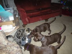 Our Litter of Four