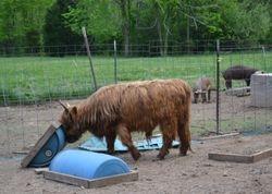 Moshi knocking around the feeders