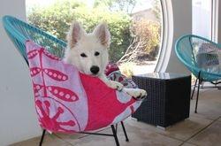 Kaiser relaxing