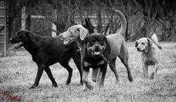 Augie, Clancey, Jax & Ginger