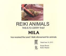 Mila the Reiki puppy