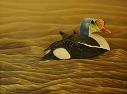 "Peaceful Waters - King Eider (12 BY 16"" oil on canvas) Original available at The Main Gallery & Framing Studio; Lacombe, AB"