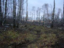 Oct 18 Trail Work