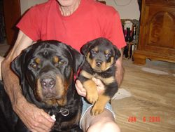 Frieden and male pup 7 weeks