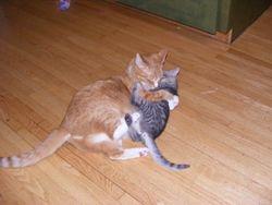Gus and Kaylee playing