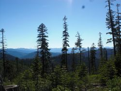 a view from a logging road