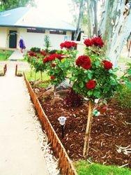 Kiosk roses