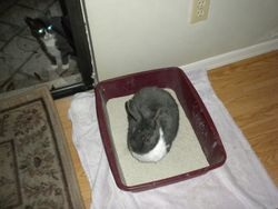 Hey, that is my litter box.