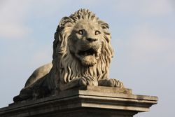 Lion on chain bridge in Budapest