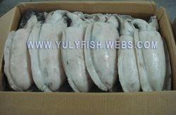 Cuttlefish Vietnam