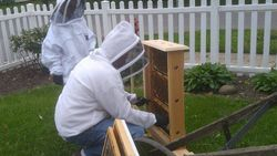 Prepping the bee display