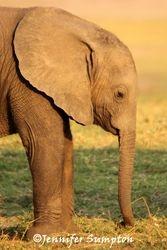 Elephant Babies