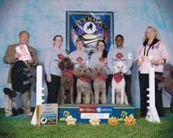 Team Poodle winning Team at PCA National Specialty.  4/27/10.  (L to R, Penny, Airly, Amber, Zoe)