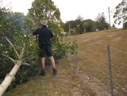Tree Cutting 1