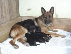 Lucy & her babies