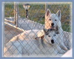 Max & Miya