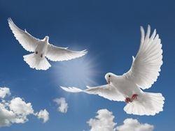 Doves return home
