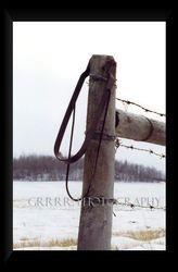 Prairie Winters