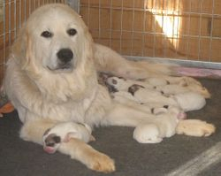 Andorra and her litter