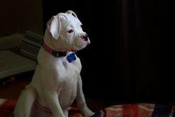 Puppy Chloe