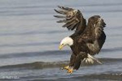This is the eagle Age