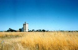036 Wheat Silos St. Arnaud 1956