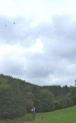 High birds on the last drive.