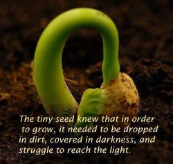 Struggles form our beauty & help us grow